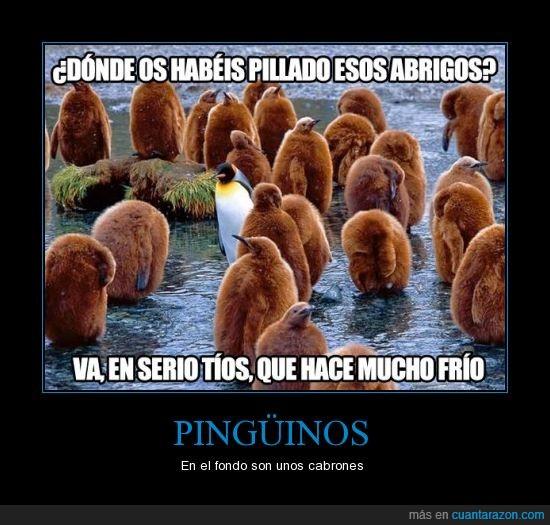 CR_755374_pinguinos
