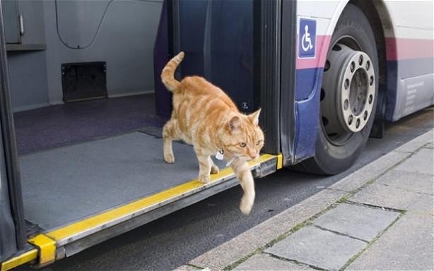 cat-Artful-Dodger_2085377b