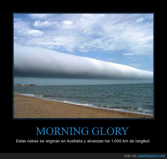 CR_660198_morning_glory