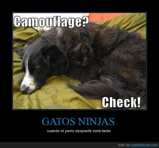 CR_633273_gatos_ninjas