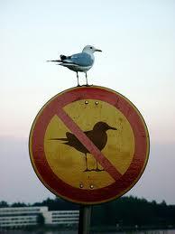 Natura rebel