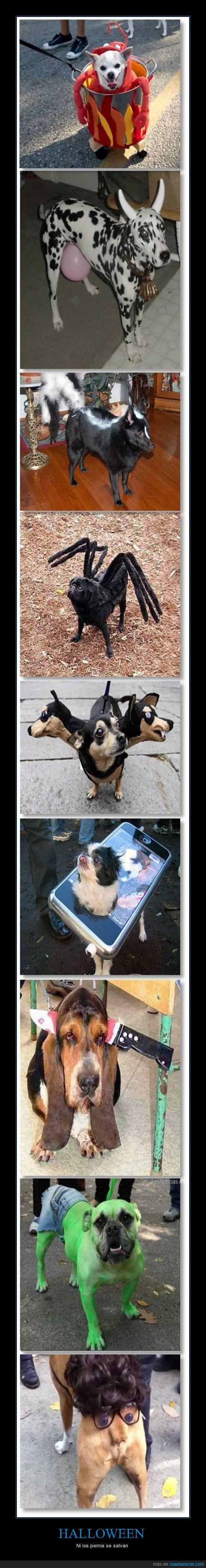 humor,Halloween,Mascotas,Disfraz,Perro