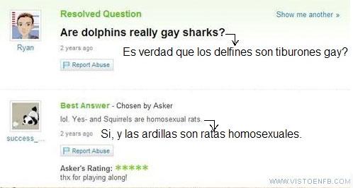 VEF_105718_yahoo_respuestas_tiburones_gay