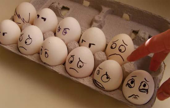 Els ous seran els primers encantats en gaudir de l'experiment