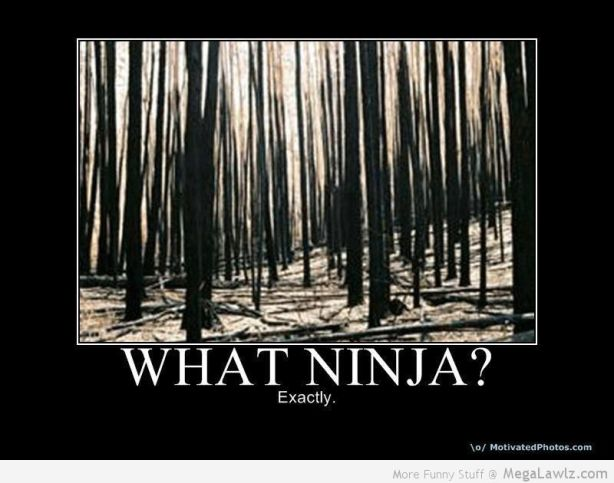 funny-ninja-pictures